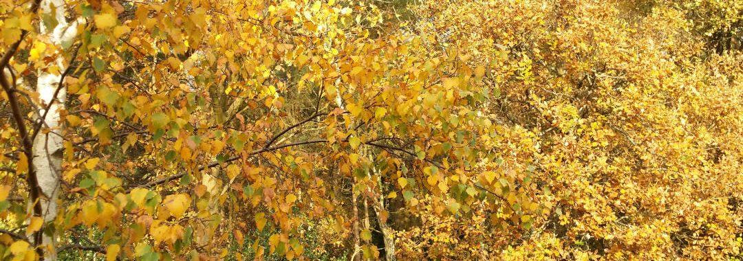 Autumn in Hampshire